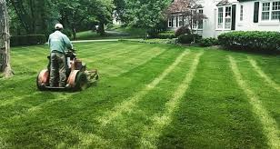 The Complete Lawn Care Guide Review